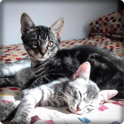 Carter y Turbo